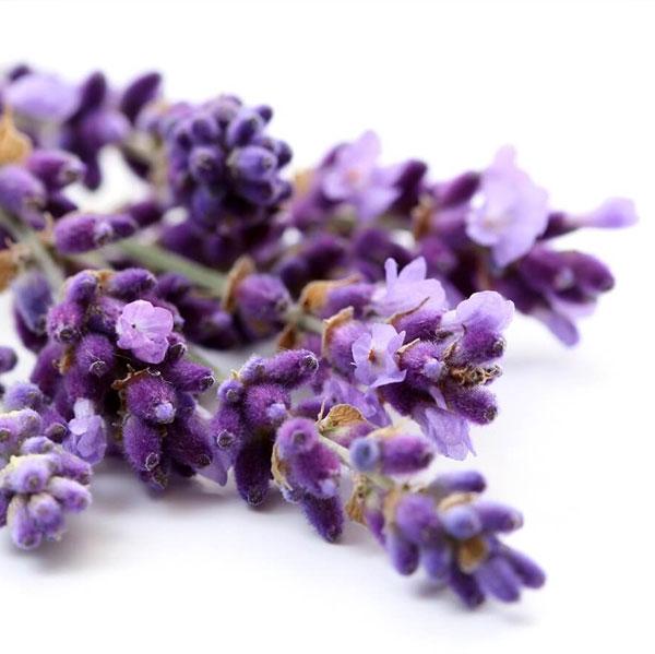 αρωματικά φυτά, αρωματικα φυτα, αποξήρανση αρωματικών φυτών, αποξηρανση αρωματικων φυτων, αποξήρανση, αποξηρανση, aromatika fyta , aromatika fita, apoksiransi aromatikon fiton, apoksiransi arwmatikwn fytwn, συσκευασία αρωματικών φυτών,συσκευασία βοτάνων, συσκευασια βοτανων, συσκευαστήριο αρωματικών φυτών, συσκευασια αρωματικων φυτων, συσκευαστηριο αρωματικων φυτων, syskeuasia aromatikon fytwn, syskeuasia arwmatikwn fytwn, syskeuasthrio aromatikwn fytwn, packaging aromatic plants, aromatic plants packaging, herbs packaging